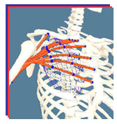 Software for Interactive Musculoskeletal Modeling (SIMM) 4.1.1 (c) MusculoGraphics, Inc. *Dongle Emulator (Dongle Crack) for KeyLok II*